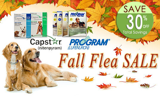 Capstar Program Fall Flea Sale