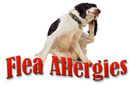 Flea Allergies