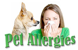 Pet Allergies