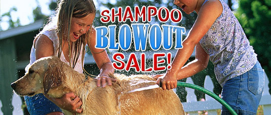 Summer Shampoo Blowout