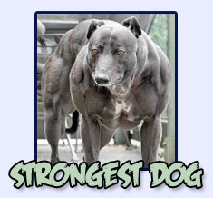 strongest dog