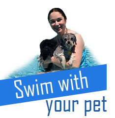 Swim with your Dog