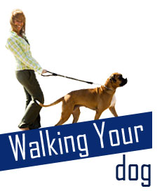 Walking with your Dog