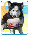 Premier Kool Dogz Ice Treat Maker