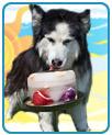Premier Kool Dogz Ice Treat Maker