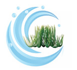 Tetra Water Wonders FW Plant Hairgrass 9