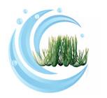 Tetra Water Wonders FW Plant Hairgrass 9�