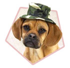 Casual Canine Camo Hats & Caps